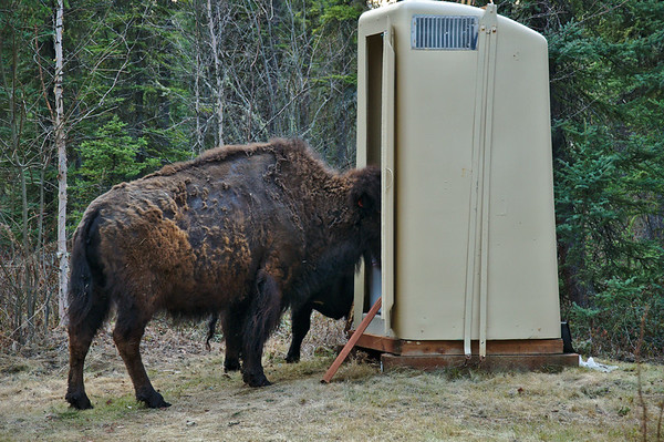 You never know what to expect in Fairbanks