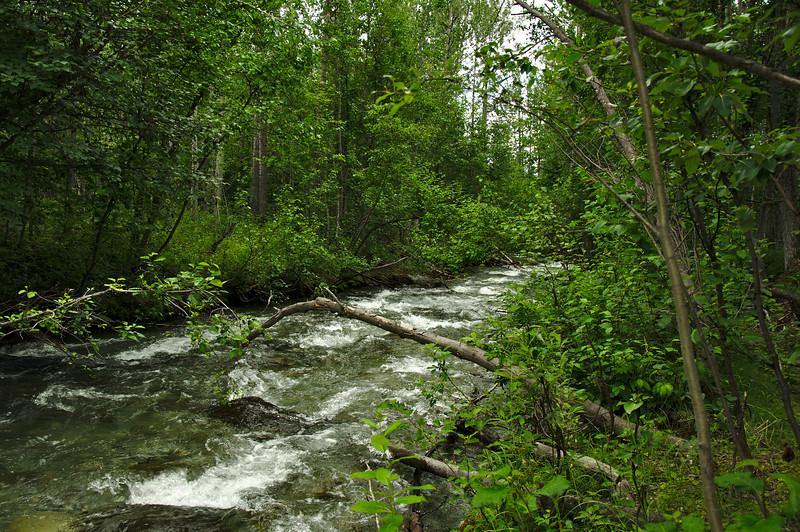 Pretty lush around the Gillahina River.