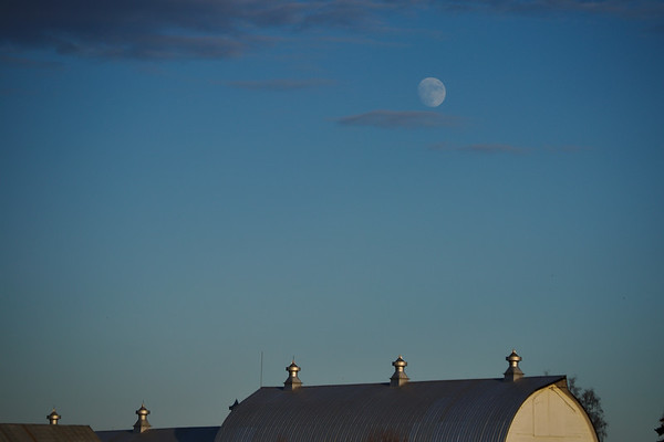 Moon over the dairy