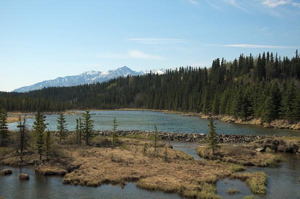 Huge beaver dam. HUGE!