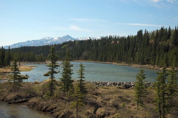 More of the beaver dam.