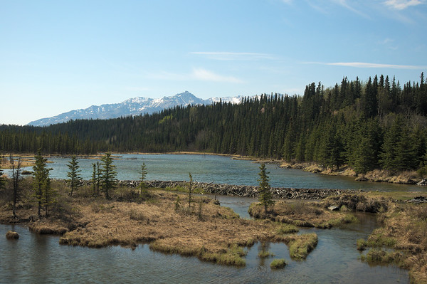 I couldn't fit this whole beaver dam in the frame. Taken on the Alaska Railroad.
