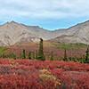 Denali Park Road Landscape
