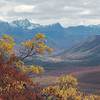 Looking south down the Savage River Valley from the Alpine Trail. Denali National Park.