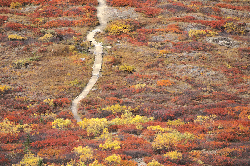 Hiking up the Alpine trail in Denali National Park