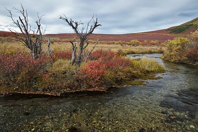 Walking along the Savage River in Denali National Park.