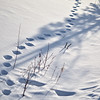 Tracks in the snow!