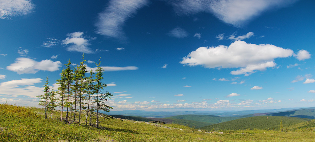Stand of spruce on Murphy Dome, looking into the Chatanika Valley.