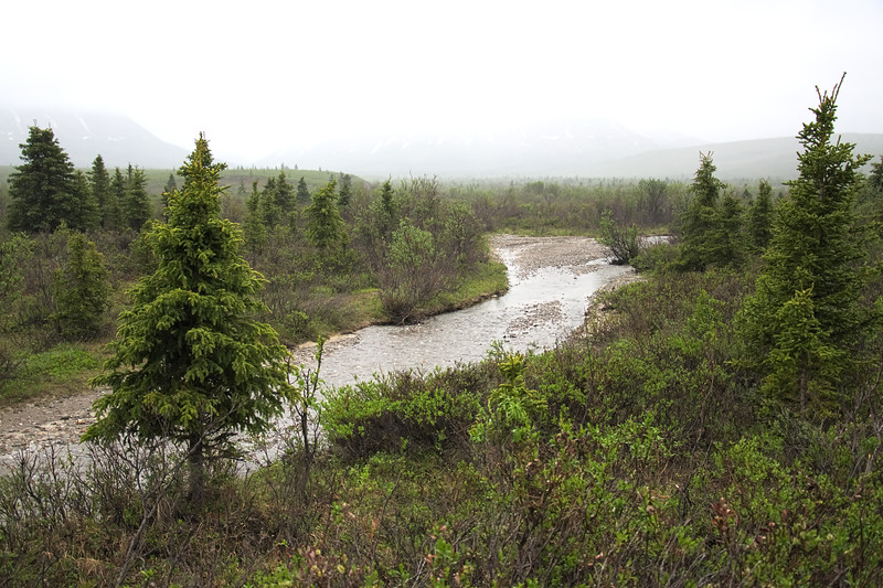 A walk along the braided Savage River from the Mountain Vista parking lot in Denali National Park.