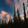 One of those cotton candy type of sunsets. Fairbanks, Alaska.