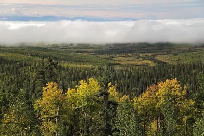 Park's Highway Landscape