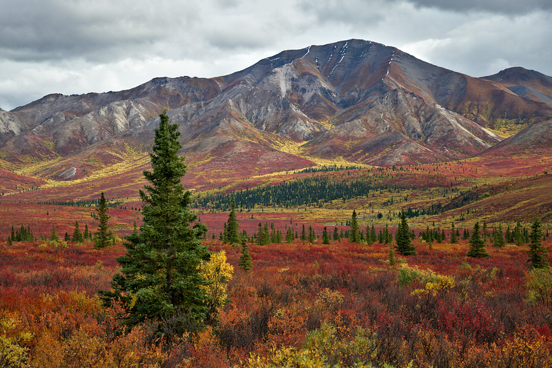 Photo of the Day | December 11, 2013  Mountains south of the Park Road in Denali National Park. Rivers of yellow wind through the red foliage.