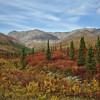 Denali National Park countryside in autumn.