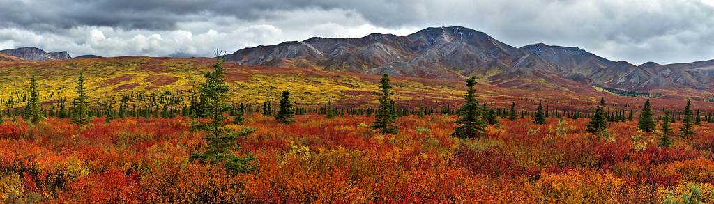 Autumn in Denali National Park - The Panorama Version