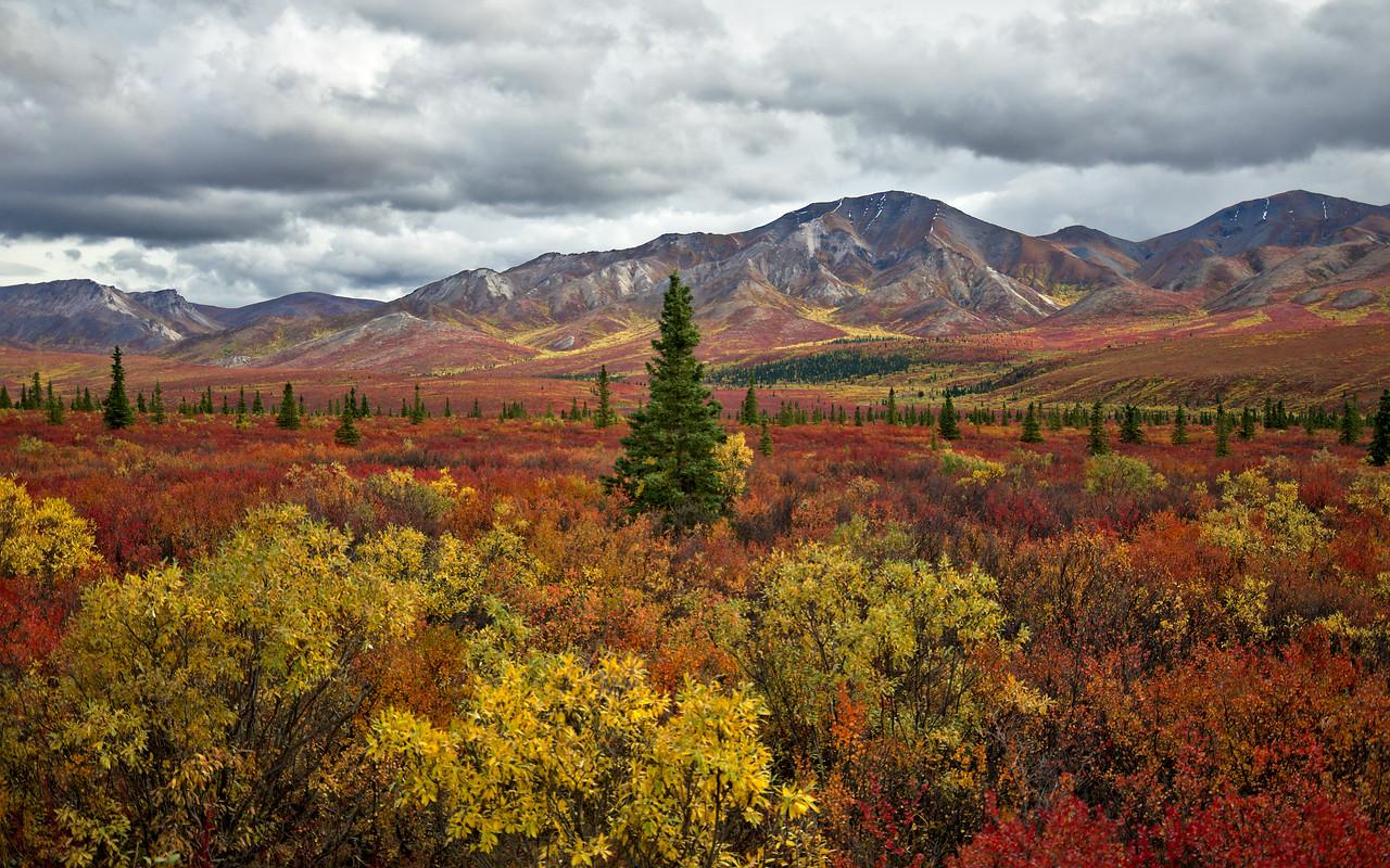 Quintessential Denali National Park