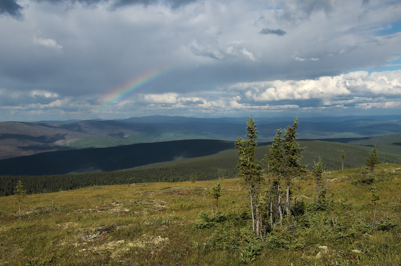 Spruce stands dot the summit of Murphy Dome and a rainbow comes out for a little while.