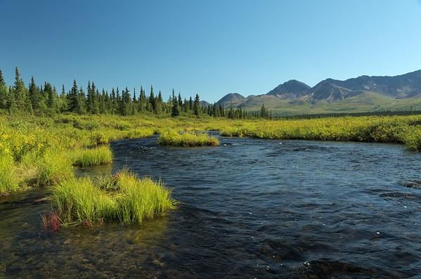 Creek on the Denali Highway