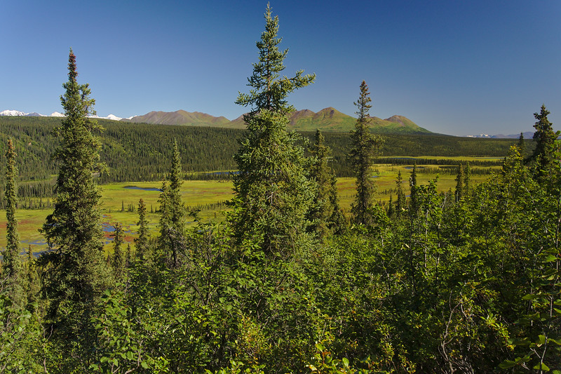 Looking over the Nenana River Valley into the foothills of the Alaska Range from a hillside near the Denali Highway.