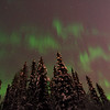 Pulsating aurora over Fairbanks early in the morning 12/11/2013. Unfortunately it was accompanied by quite a bit of wind blowing the trees around - difficult for long exposures and ruining my chance of taking a time-lapse.