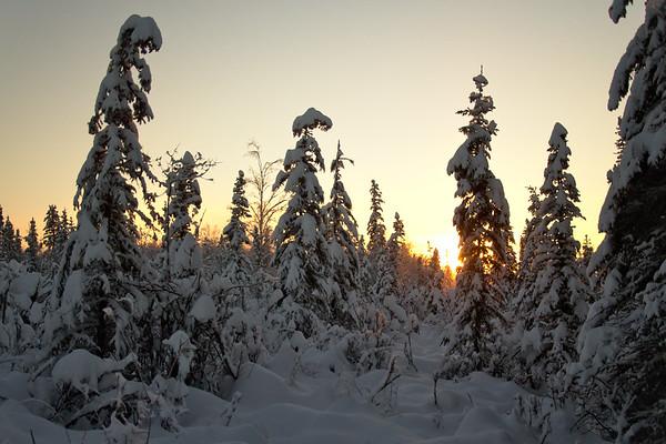 Merry Christmas from Fairbanks!