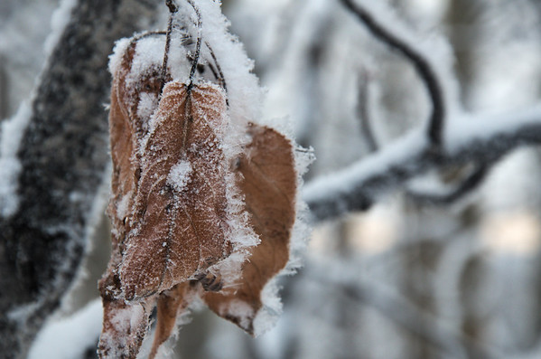 Frost is forming on everything. There's also a good surface hoar on the snow from Sunday.
