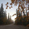 This was a couple of days after we had our first (early) snowfall in Fairbanks. We woke up to a bit of fog on our street.