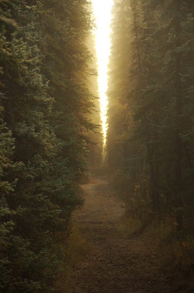 Narrow slits of golden light.