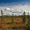 An autumn day just north of the Alaska Range off of the Richardson Highway.