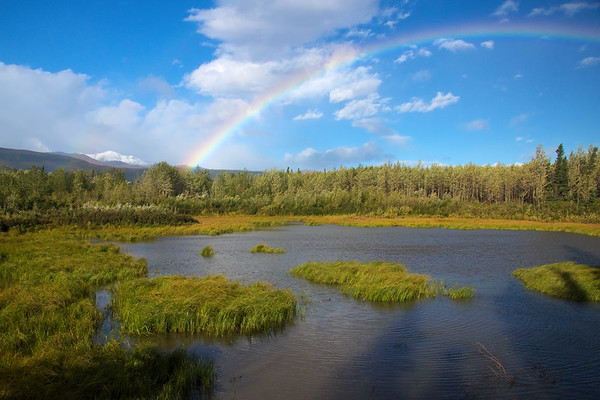 Rainbow over a pond, just off the Richardson Highway.