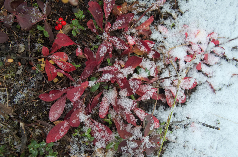Lots of snow-covered fall foliage.