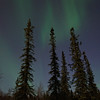 Wonderful boreal forest under the aurora borealis!