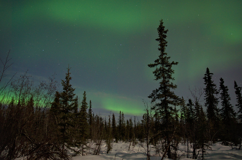 Everything on the ground was brightly lit by the moon and the sky was filled with the northern lights.