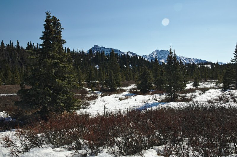More forests and mountains in Denali National Park.