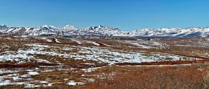 Denali Spring Panorama
