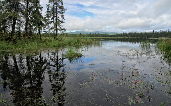Summer on Smith Lake