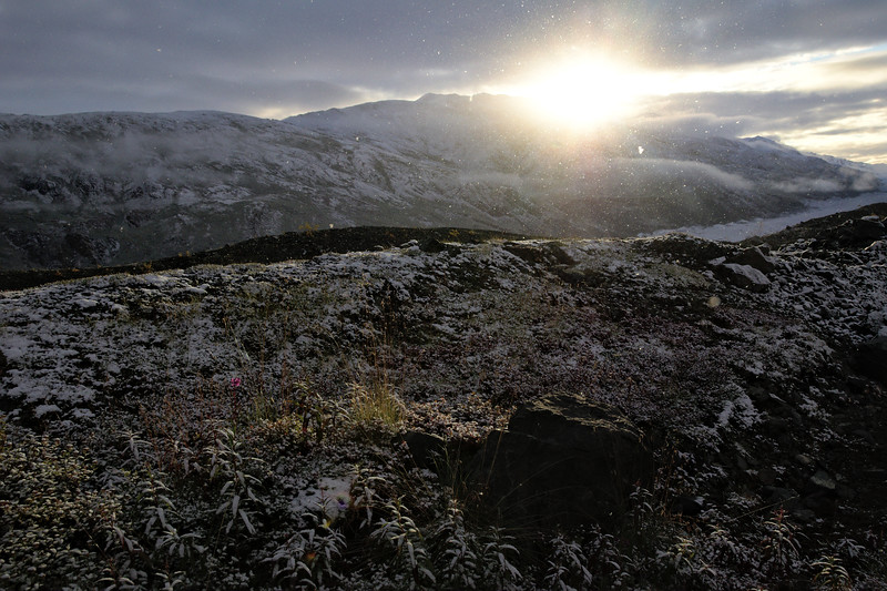 Lot's of snow filling the sky as the Sun rose over the mountains to the north, the very top of the fireweed in bloom, everything covered in fresh dust. At the Canwell Glacier in the Alaska Range.