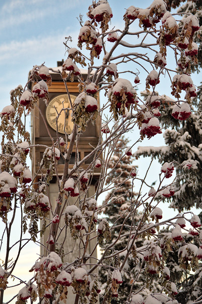 Mountain Ash at the Clocktower