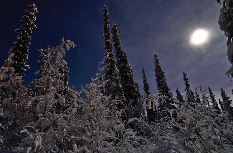 Snowy Forest Night