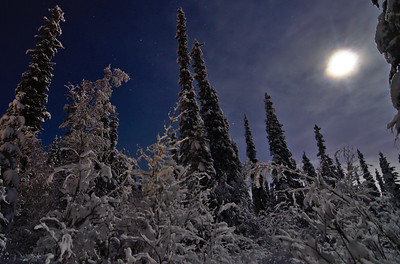 Snowy Forest Night