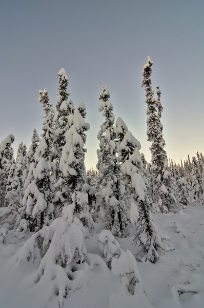 I love these forests in winter. Love!