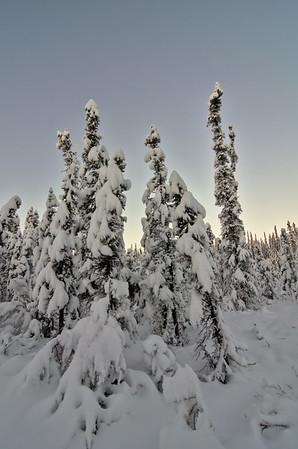Raggedy Trees