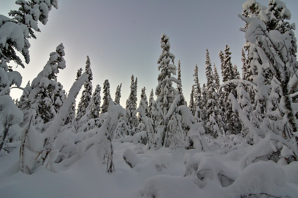 Boreal Winter Dream