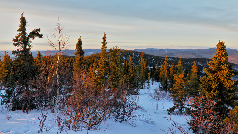 Gorgeous light on the trees and hills around Ester Dome