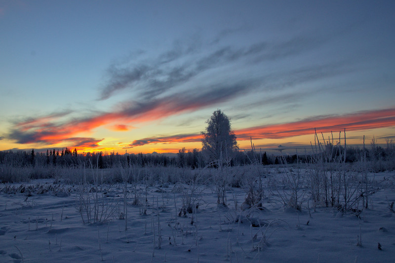 Taken about 20 minutes before sunrise at the Alaska Dog Musher's Association in Fairbanks, Alaska on the winter solstice. A fine way to start the shortest day of the year.