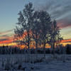 Colors behind birch