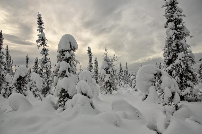Pooch Trail in Winter - UAF