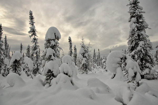 Winter Scene - Fairbanks