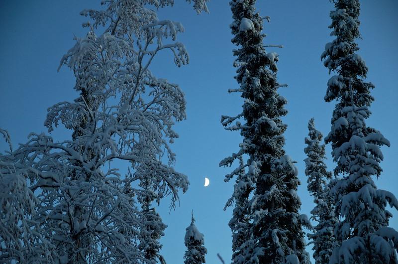 Boreal Moon