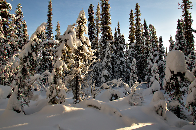 A little light shining through in our boreal forest.