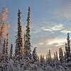 boreal skies